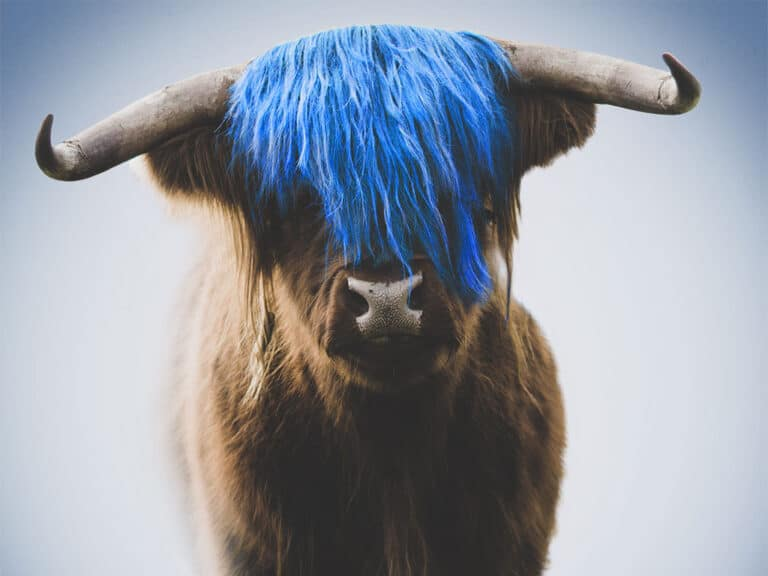 HAIRY COO Hairdressers Basel | Gloria Remy-Hinds